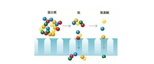 怎样选择胶原蛋白产品?胶原蛋白什么时候喝最好?